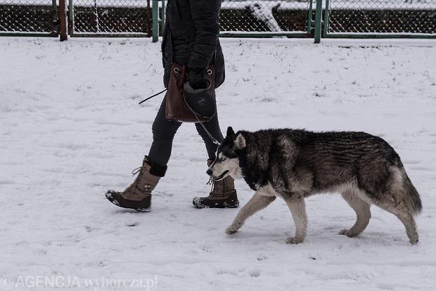 Zdjęcie numer 42 w galerii - Wrocław pod śniegiem. Zobacz zimowe zdjęcia z centrum miasta [FOTO]
