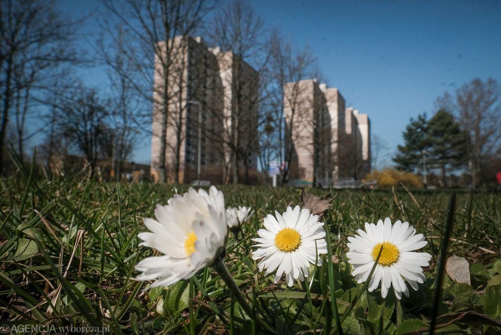 Pogoda. Pierwsze dni kwietnia będą deszczowe, potem zrobi się ciepło (zdjęcie ilustracyjne)