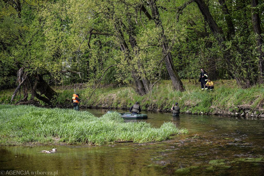 Nowogrodziec. Zaginął 3,5-letni Kacper Błażejowski. Trwają poszukiwania