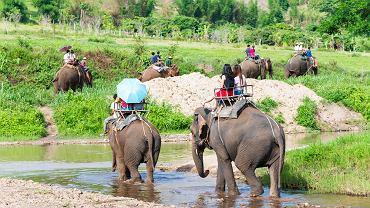 Słonie w jednym z parków w Chiang Mai nie będą już wozić turystów