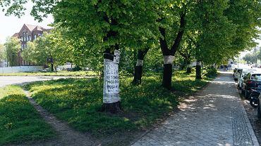 Deweloper: Posadzimy dwa drzewa w miejsce jednego wyciętego. Mieszkańcy nie są przekonani