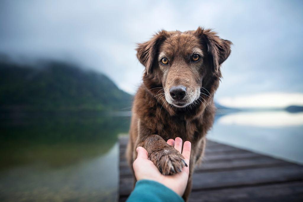 Ile lat żyją psy? Wszystko zależy przede wszystkim od wielkości naszego pupila.