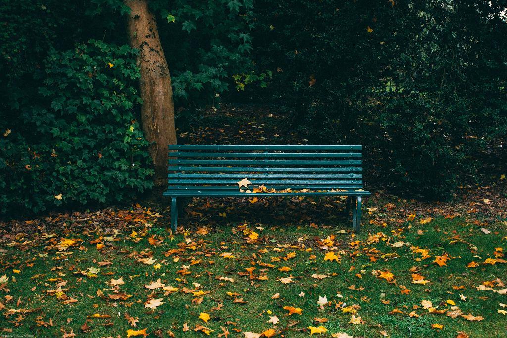 Katowice. Ktoś podpalił kobietę śpiącą na ławce w parku? (zdjęcie ilustracyjne)