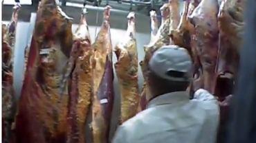 Reportaż 'Superwizjera' o nielegalnym uboju krów