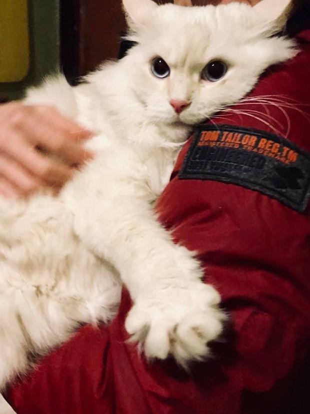 Zdjęcie numer 52 w galerii - Karmel, Daktyl, Kapitan Benny, Ptyś, Wiesław... Kochane i piękne - oto Wasze koty [GALERIA NA DZIEŃ KOTA]