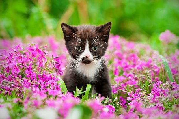 Rośliny trujące dla kotów - lista i zdjęcia. Jakie kwiaty są bezpieczne dla kota? Zdjęcie ilustracyjne