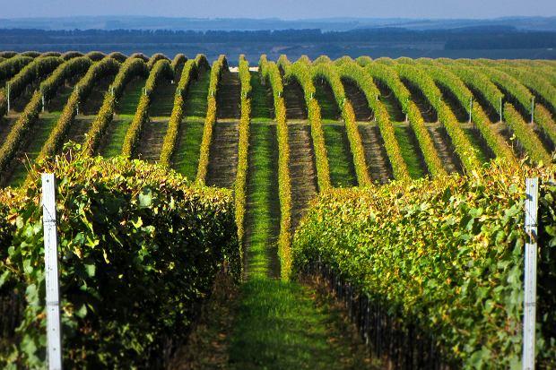 Winnica w Czechach