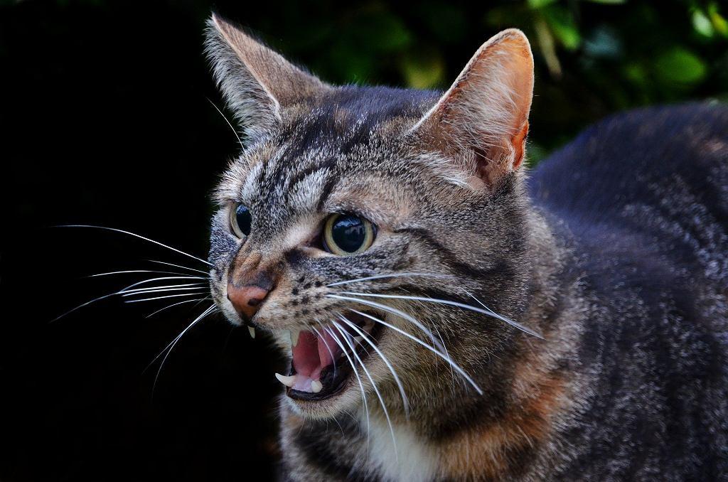 Kot na pokładzie zmusił załogę do zawrócenia (zdjęcie ilustracyjne)