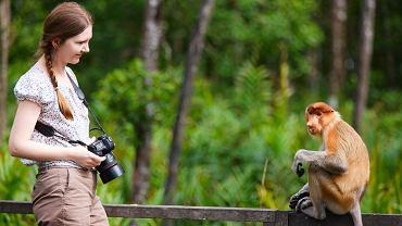 Obserwowanie małp na wyspie Borneo w Malezji