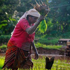 Równość kobiet w rolnictwie może pomóc w walce z globalnym ociepleniem.