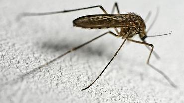 Męczą cię uporczywe komary lub mszyce? Pomoże aromatyczna przyprawa, którą większość osób ma w swojej kuchni