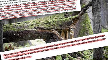 'Solidarność' alarmuje: Krajowy Zasób Nieruchomości pozwoli rządowi sprzedawać tereny leśne
