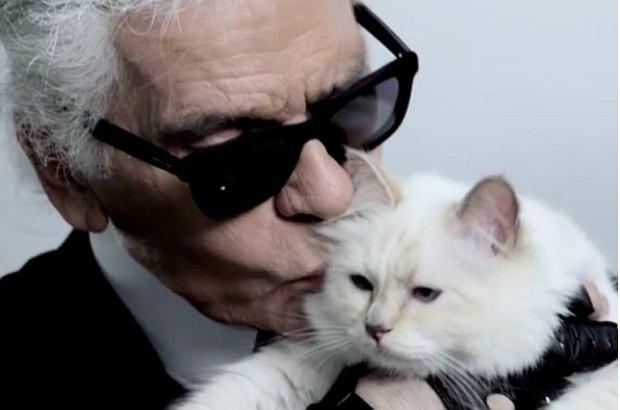 Cudowna Kotka Karla Lagerfelda zostanie milionerką? Może odziedziczyć UF24