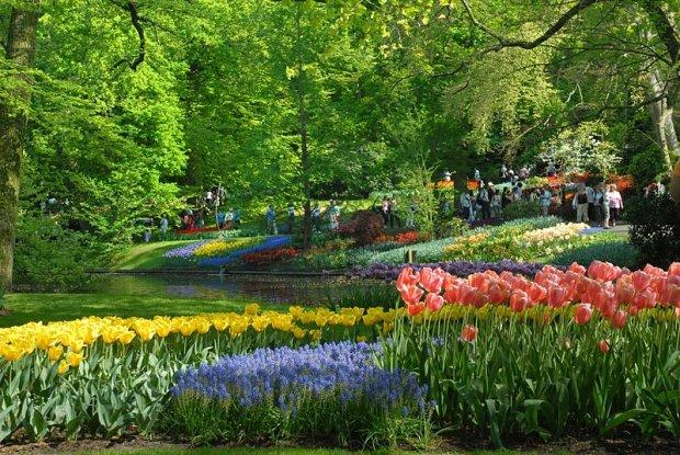Fortunę za tulipany. Keukenhof w Holandii - najbardziej obfotografowane ogrody świata. Co warto wiedzieć przed zobaczeniem?