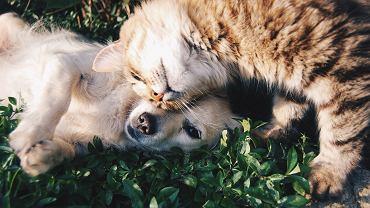 zwierzęta domowe (zdjęcie ilustracyjne)