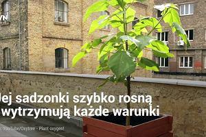 To drzewo może zmienić nasze życie. Tylko czy na pewno będzie to dobra zmiana?