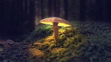 Sennik grzyby interpretuje na wiele sposobów. Zdjęcie ilustracyjne