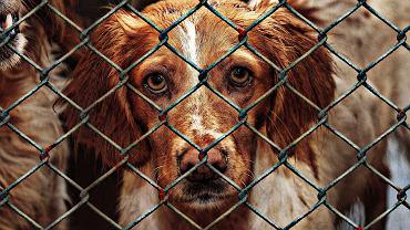 schronisko dla zwierząt (zdjęcie ilustracyjne)