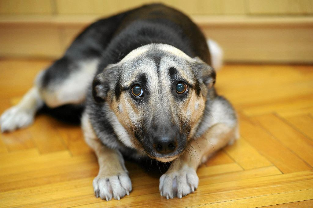 Pies może cierpieć, kiedy zbyt długo sam przebywa w domu.