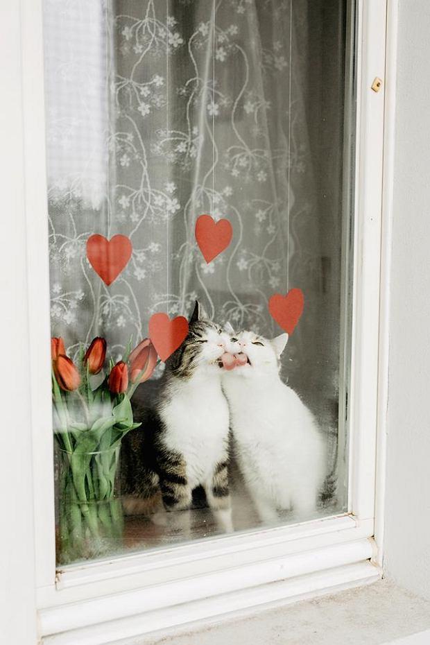 Zdjęcie numer 50 w galerii - Karmel, Daktyl, Kapitan Benny, Ptyś, Wiesław... Kochane i piękne - oto Wasze koty [GALERIA NA DZIEŃ KOTA]