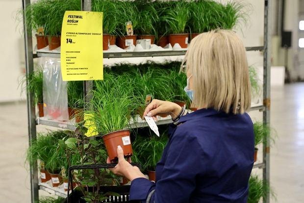 Zdjęcie numer 2 w galerii - Zazieleniły się targi w ten weekend. Trwa Festiwal Roślin i ich wyprzedaż. Zobacz, co można tam kupić  [ZDJĘCIA]