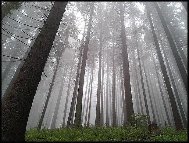 Żywe drapacze chmur. /fot. Magda Acer