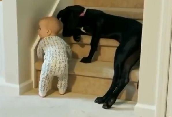 Z takim opiekunem maluch jest bezpieczny.