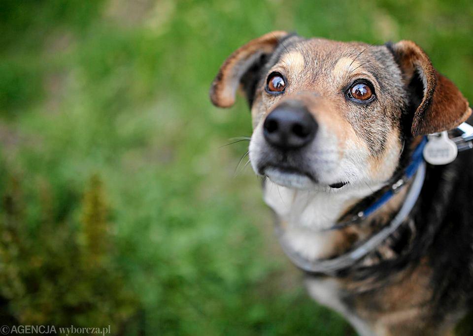 Zdjęcie numer 4 w galerii - Twój pies boi się burzy? Zobacz, jak możesz mu pomóc