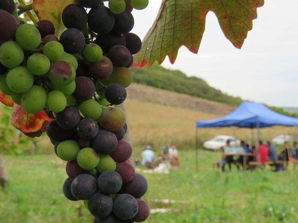 Winnica Vineas Montis w Santoku. Warsztaty winiarskie 22 sierpnia 2020 r.