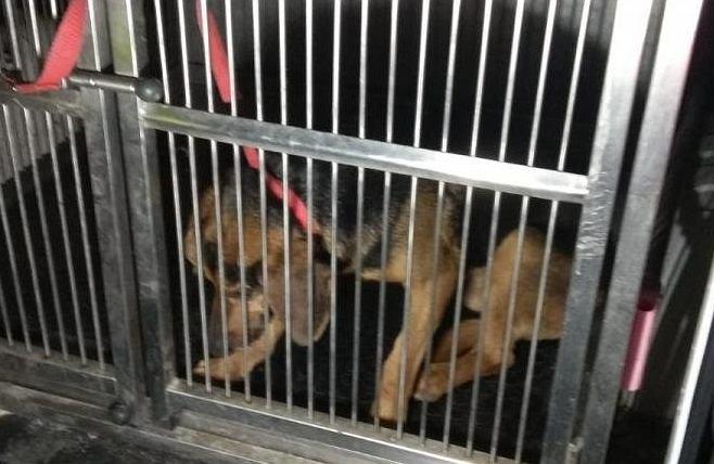 Pies uwięziony na wysepce