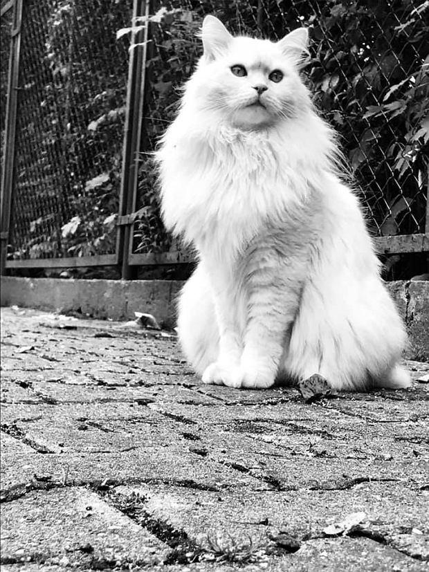 Zdjęcie numer 49 w galerii - Karmel, Daktyl, Kapitan Benny, Ptyś, Wiesław... Kochane i piękne - oto Wasze koty [GALERIA NA DZIEŃ KOTA]