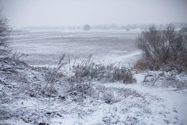Zdjęcie numer 40 w galerii - Zima w Krakowie - śnieg przykrył ulice, domy, parki [GALERIA]