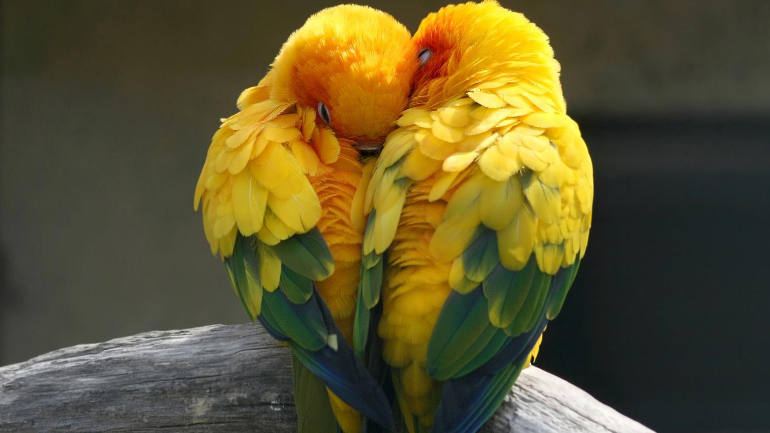 Obserwując miłosne związki zwierząt, można by nakręcić 'Modę na sukces'
