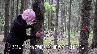 Projekt Ne Spoon w Puszczy Białowieskiej.