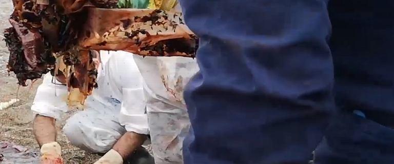 Ciało kaszalota na włoskiej plaży. W żołądku miał kilogramy plastiku