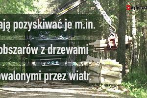Tak odradza się Puszcza Białowieska. Aktywiści alarmują: planowane wycinki zakłócą leczenie ran
