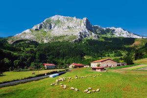 Kulinarne szlaki Europy. Gdzie degustować cydr, wino i czekoladę