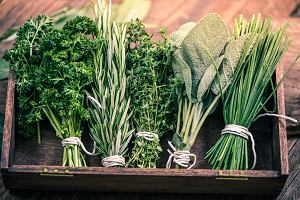 Zioła na wątrobę: jakie zioła wspomagają pracę wątroby