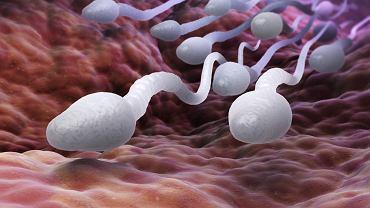 Azoospermia to brak plemników w męskim nasieniu i jedna z form męskiej niepłodności
