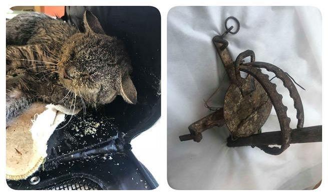 Kot uratowany w miejscowości Karpniki. Zwierzę wpadło we wnyki