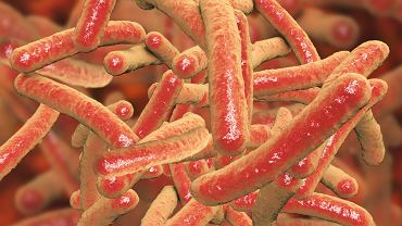 Gruźlicę płuc wywołują prątki Mycobacterium tuberculosis, które przenoszą się z człowieka na człowieka drogą kropelkową, np. podczas kaszlu
