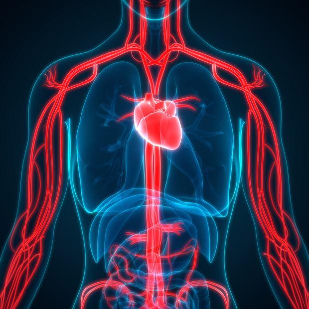 Choroby układu krążenia: przyczyny, objawy, leczenie