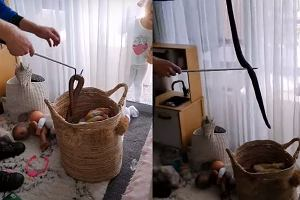 Olbrzymi wąż znaleziony w koszyku na zabawki. Przerażeni rodzice musieli wezwać pomoc