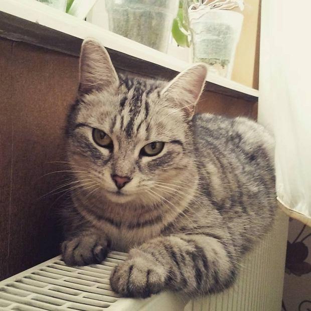 Zdjęcie numer 47 w galerii - Karmel, Daktyl, Kapitan Benny, Ptyś, Wiesław... Kochane i piękne - oto Wasze koty [GALERIA NA DZIEŃ KOTA]