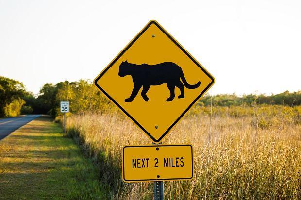 USA. Park Narodowy Everglades / shutterstock