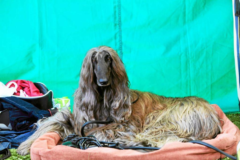 W Warszawie w najbliższy weekend odbędzie się wielka wystawa psów.