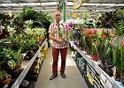 Firma Tomaszewski: od warzyw po falenopsisy