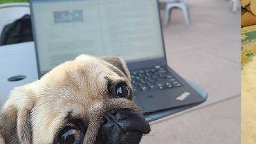 6 podstawowych rzeczy, na które należy zwracać uwagę, wybierając nowy laptop