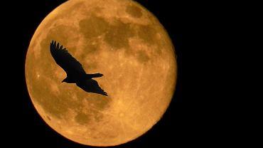 Superksiężyc, zdj. ilu