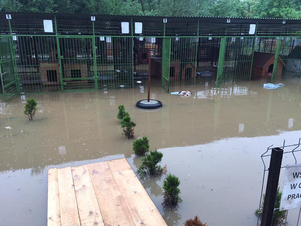 Skutki powodzi w schronisku w Borku.